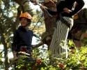 klimmen in natuur